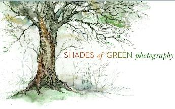 Shades-of-green.JPG